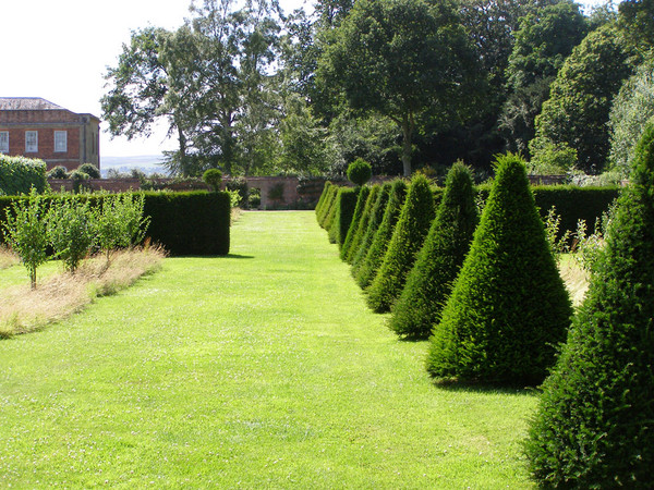 Featured Image of Garden Hedge Ideas