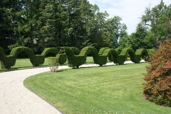 Featured Image of Garden Hedges Ideas