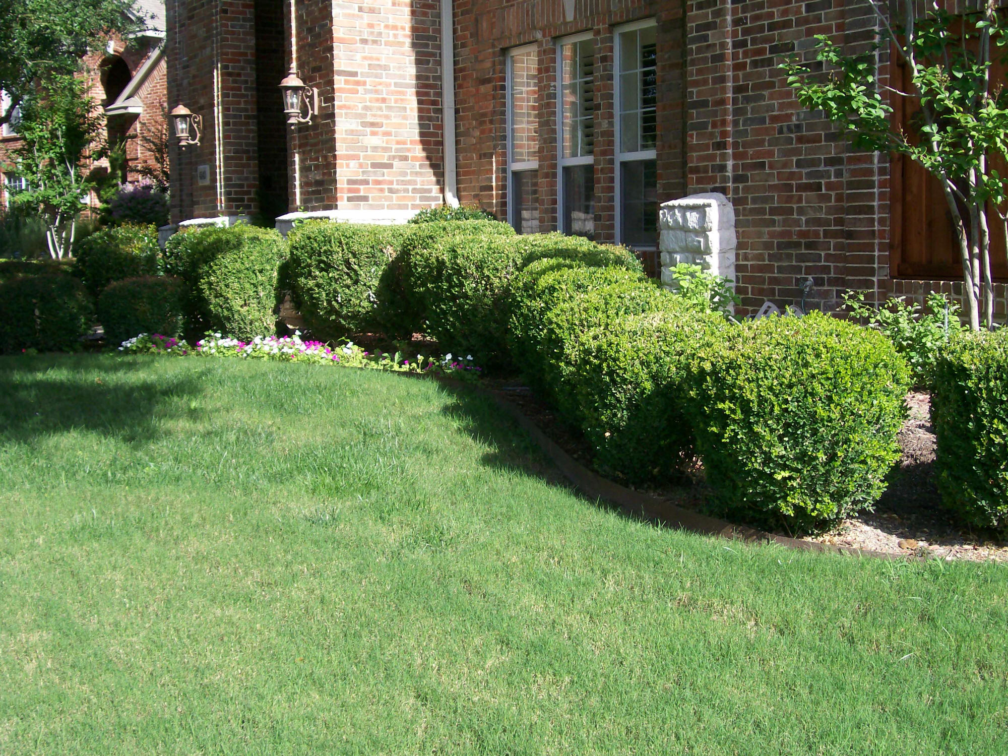 Featured Image of Home Garden Hedges Ideas