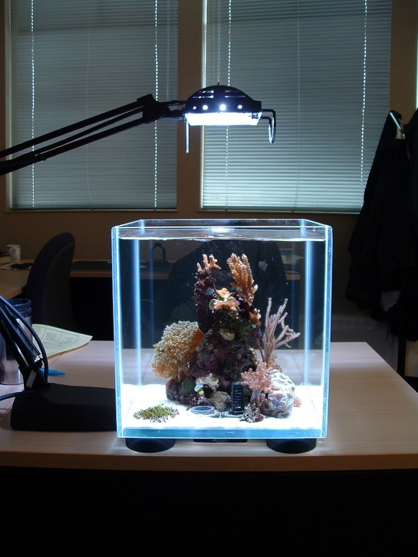 Featured Image of Mini Aquarium Design Ideas