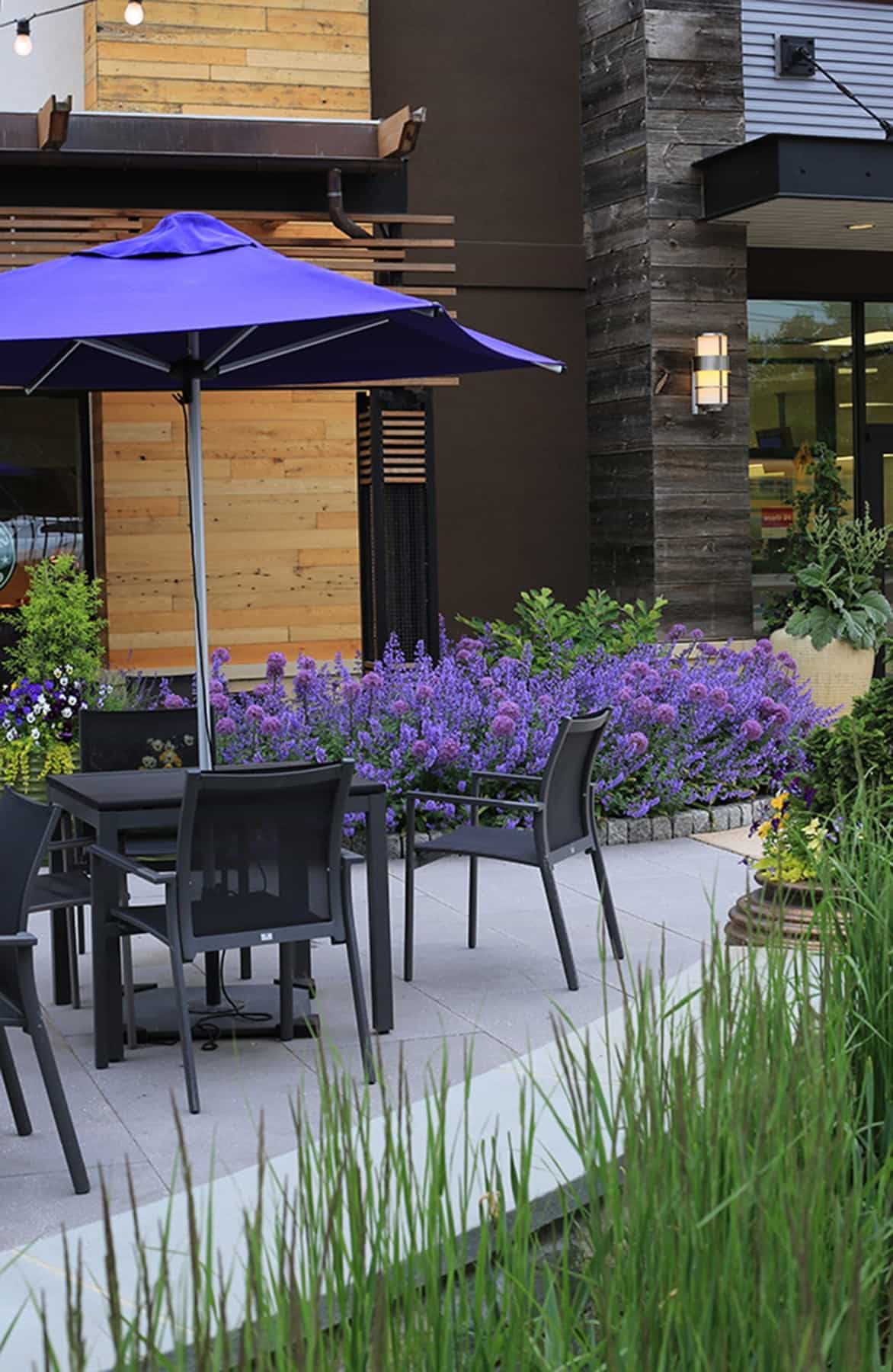 Featured Image of Beautiful Purple Flowers And Patio Umbrellas