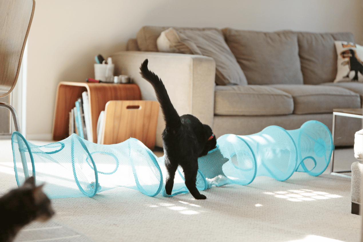 IKEA Cat Tunnel For Living Room (Image 2 of 10)