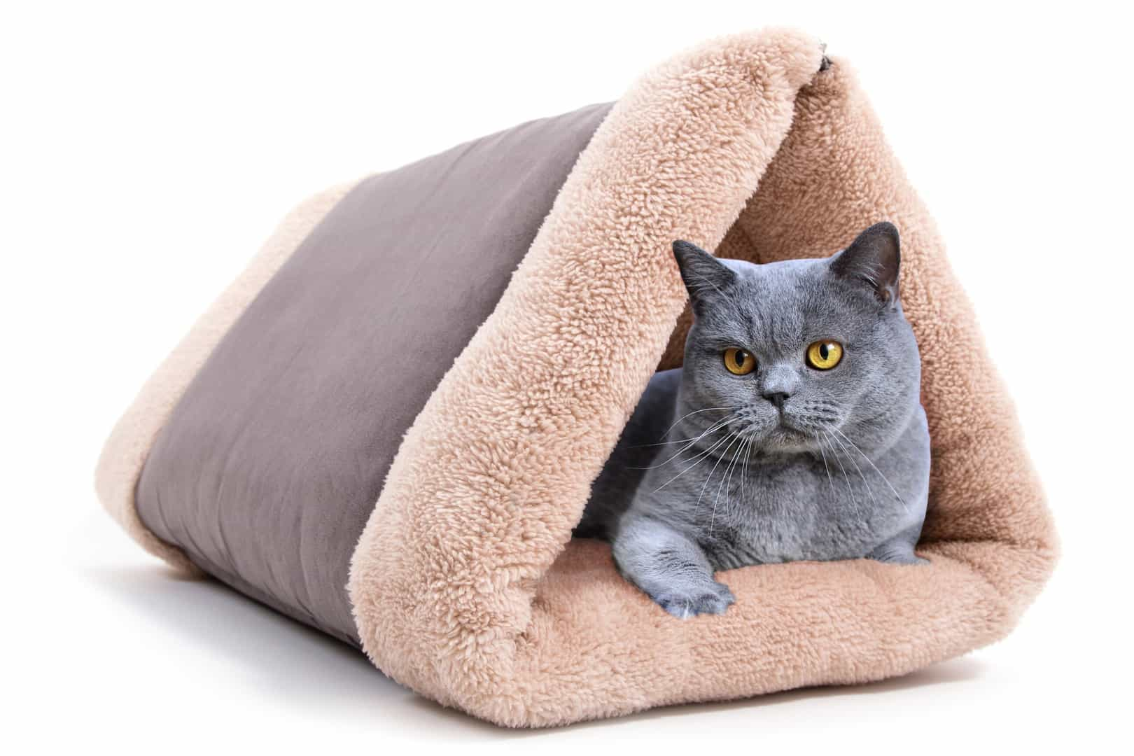 Triangle Shape Cat Tunnel Sofa (Image 7 of 10)