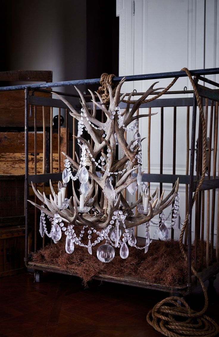 Ralph Lauren Homes Stag Chandelier Combines Naturally Shed In Stag Horn Chandelier (View 9 of 15)