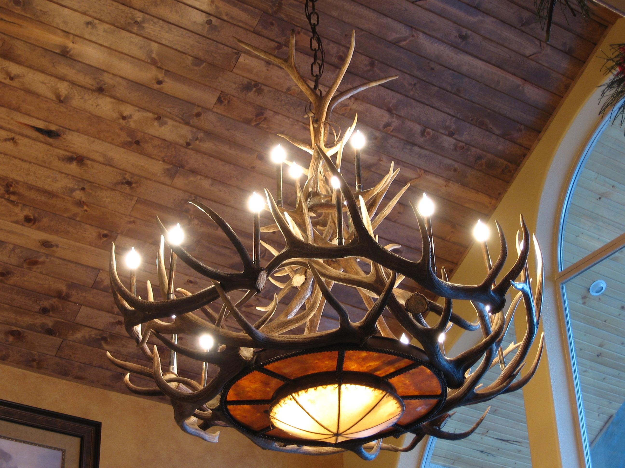 Tweeds Rawhide Mica Elk Antler Chandelier Pertaining To Large Antler Chandelier (Image 12 of 15)