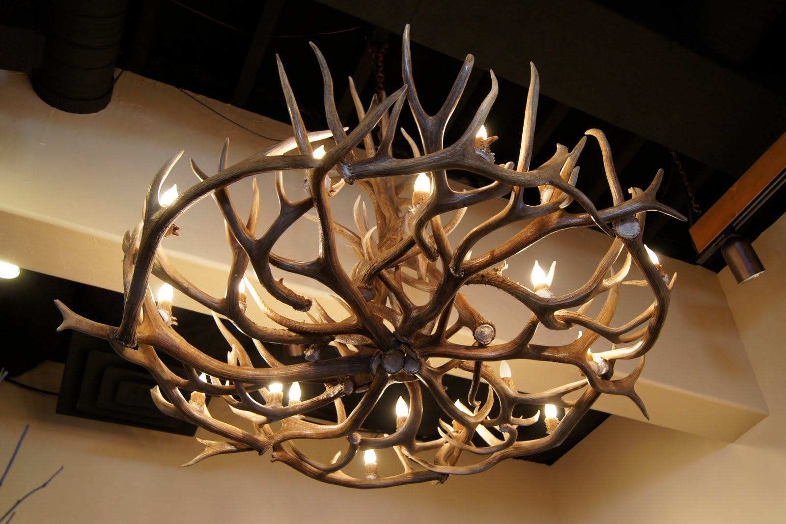 Unique Antler Chandelier Ideas Inside Stag Horn Chandelier (Photo 2 of 15)