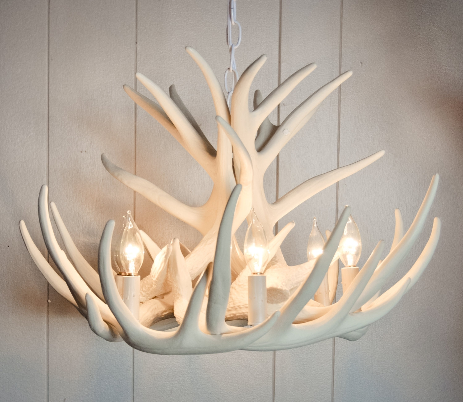 White Antler Chandelier Displaying Unique And Rustic Details In Throughout Stag Horn Chandelier (View 6 of 15)
