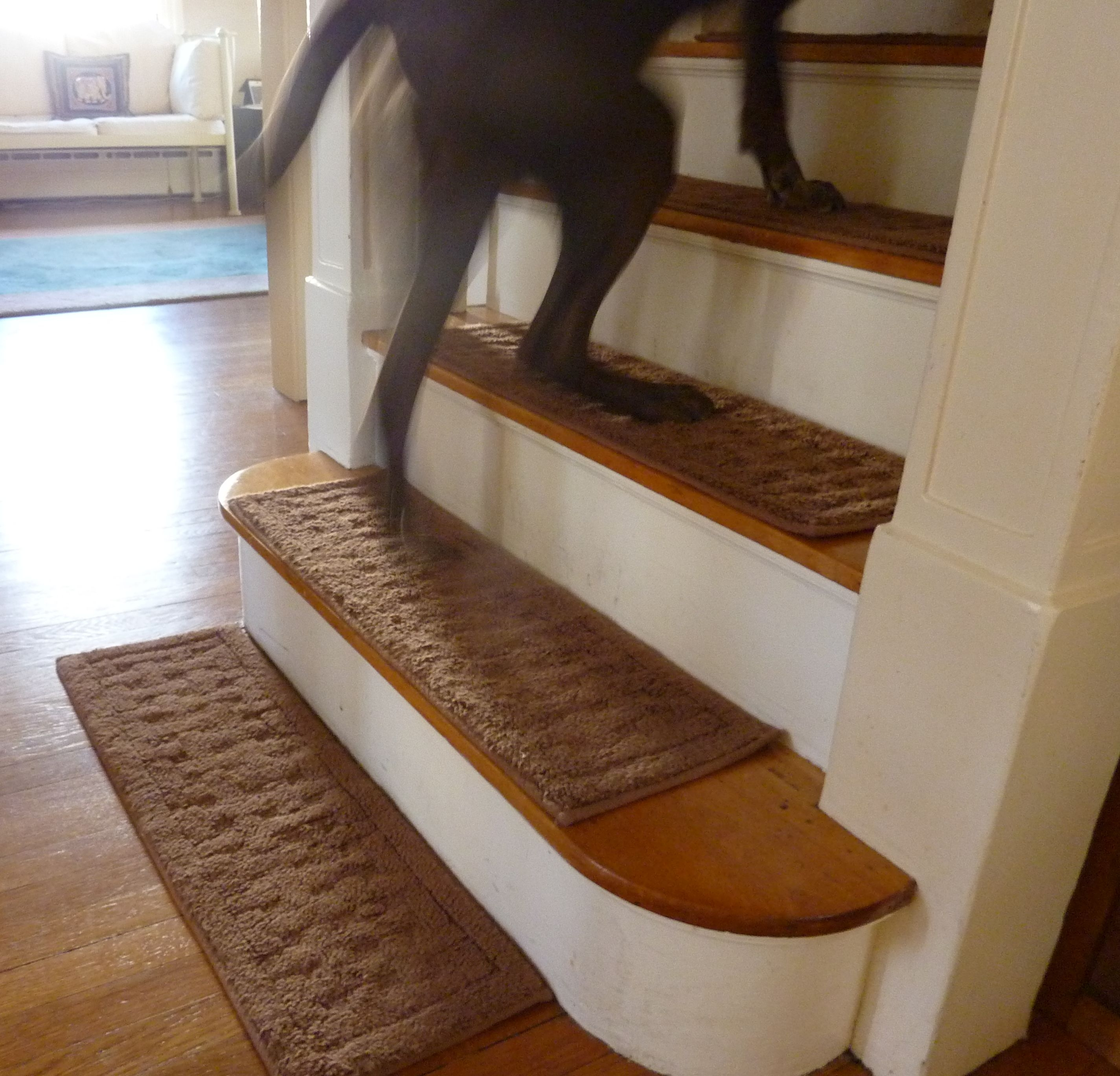 Dogs Dont Look Both Ways A Book About Life And Dogs Part 2 Pertaining To Stair Slip Guards (Image 6 of 15)