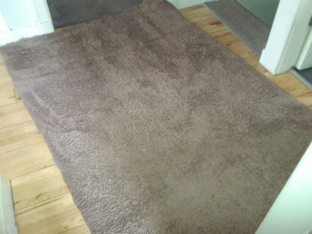 Dunelm Teddy Bear Rug In Colinton Edinburgh Gumtree With Regard To Teddy Bear Rugs (View 7 of 15)