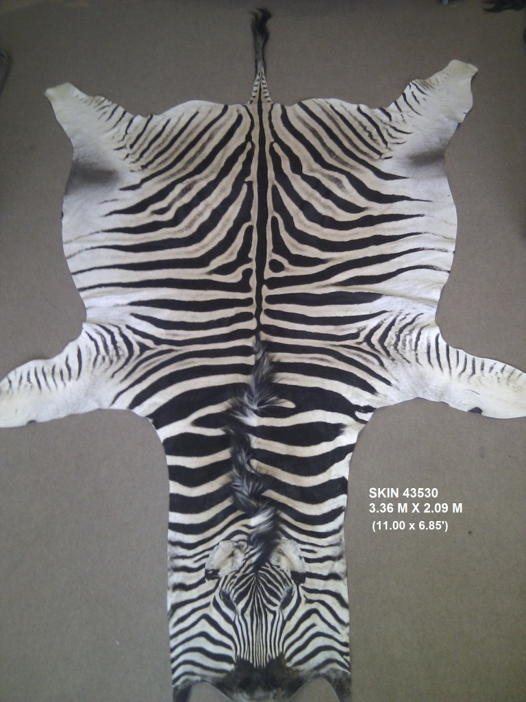 Flooring Elegant Floor Using Zebra Skin Rug Amazon Ideas With Regard To Zebra Skin Rugs (Image 6 of 15)