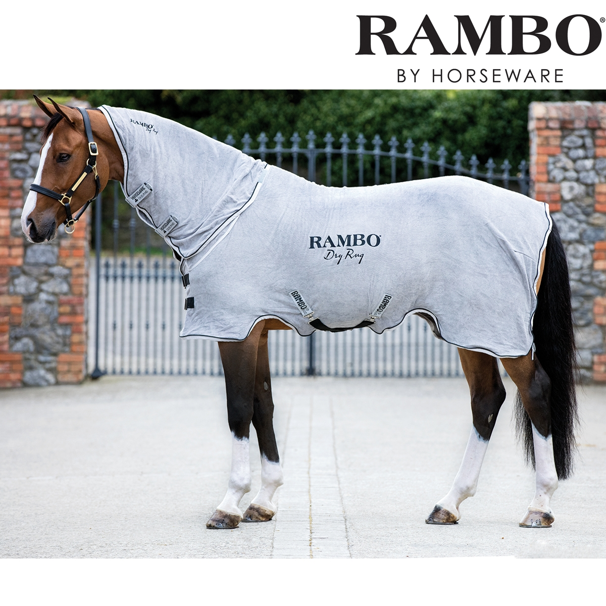 Featured Image of Rambo Rugs