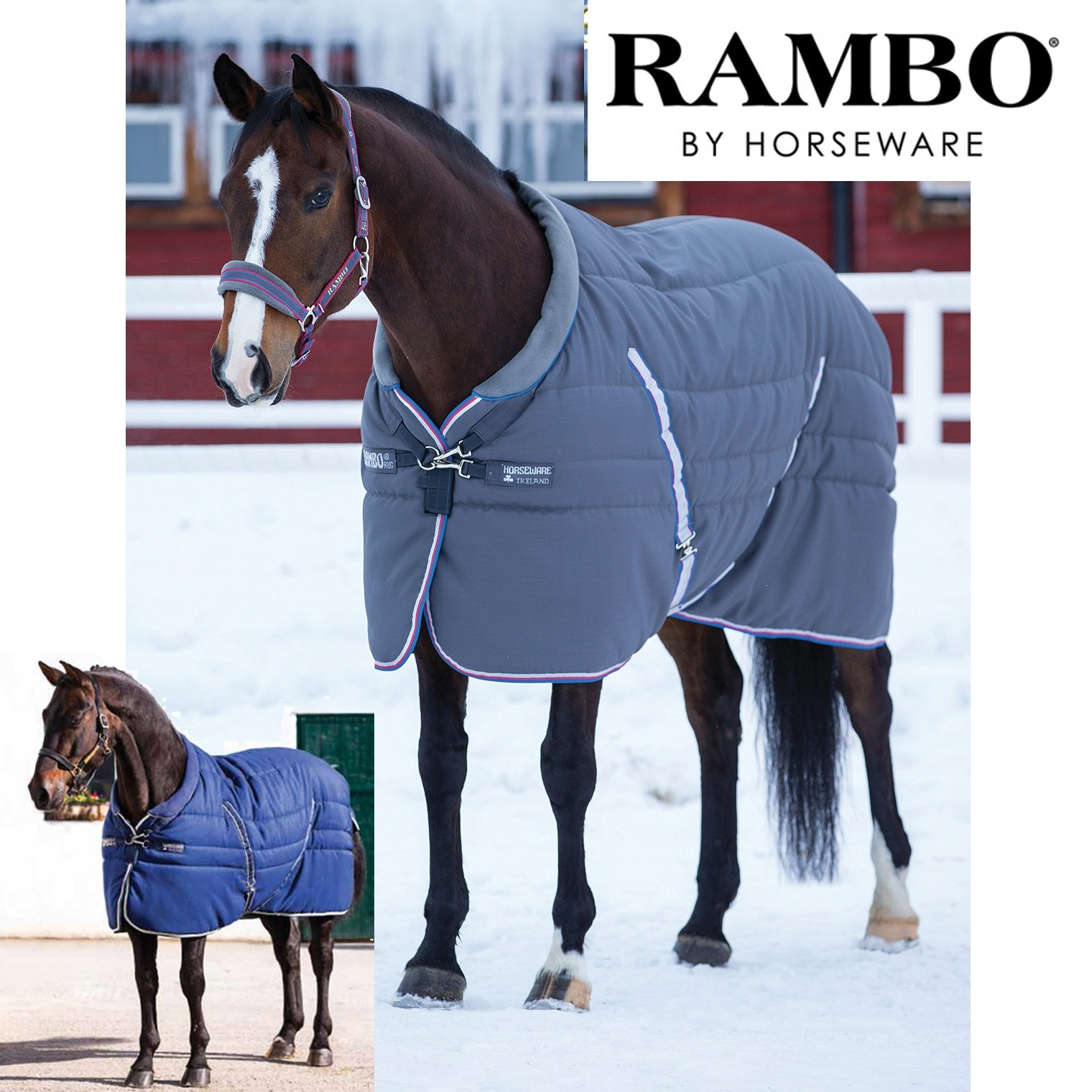 Rambo Pony Rugs Roselawnlutheran With Rambo Rugs (Image 11 of 15)