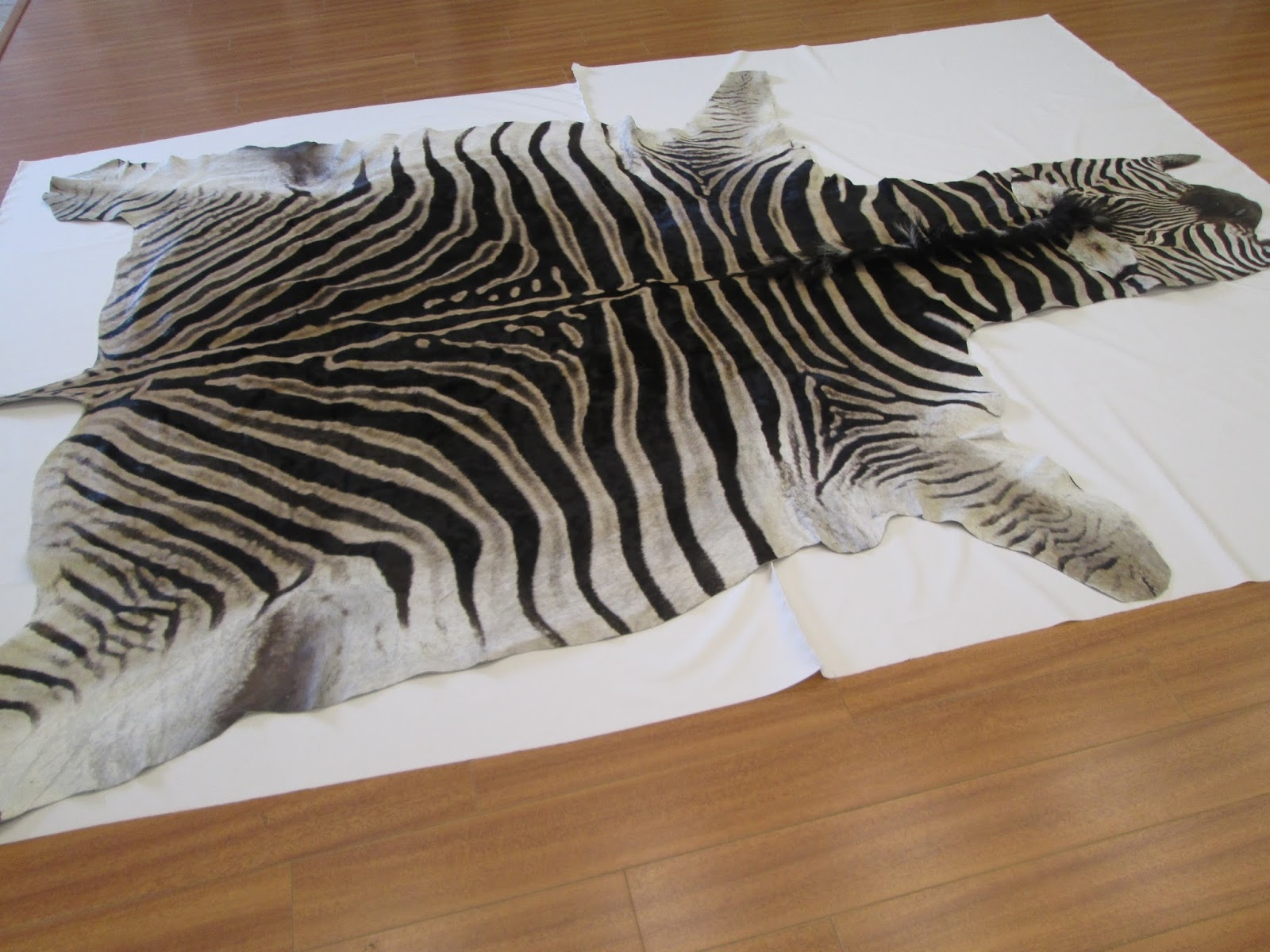 Rug Master Zebra Hide Zebra Skin Cleaning And Repair In Los Angeles Inside Zebra Skin Rugs (Image 7 of 15)