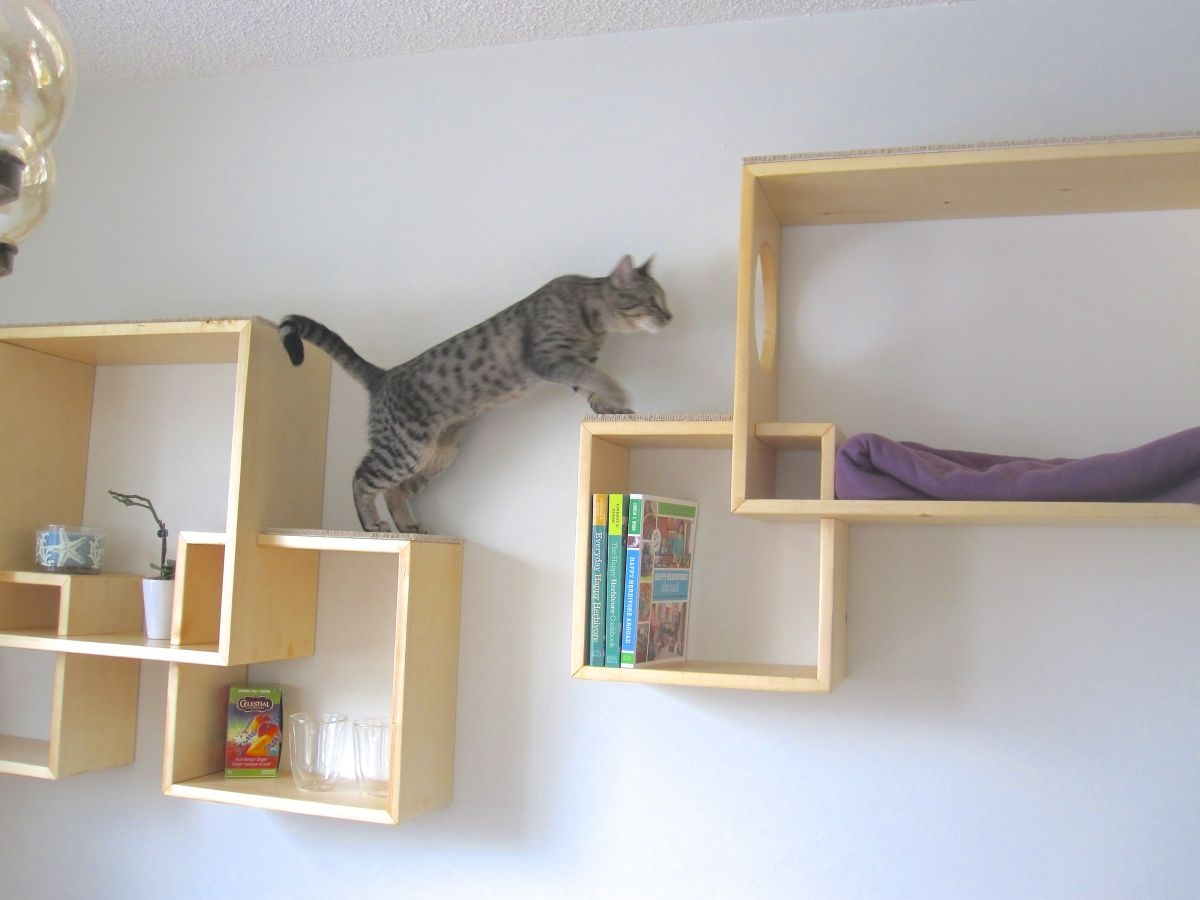 Trend Wall Mounted Cat Shelves 98 For Your Wall Mounted Glass Pertaining To Wall Mounted Glass Display Shelves (Image 8 of 15)