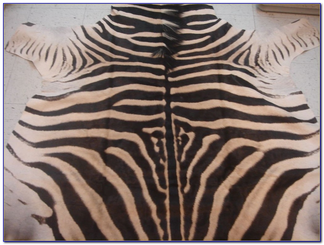 Zebra Skin Rug South Africa Rugs Home Design Ideas Regarding Zebra Skin Rugs (Image 15 of 15)