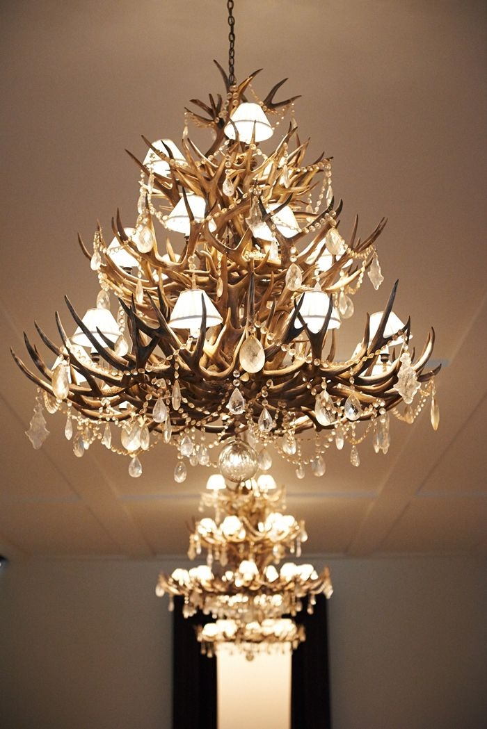 372 Best Lighting Lamps Fans Images On Pinterest Intended For Turquoise Antler Chandeliers (Image 4 of 25)