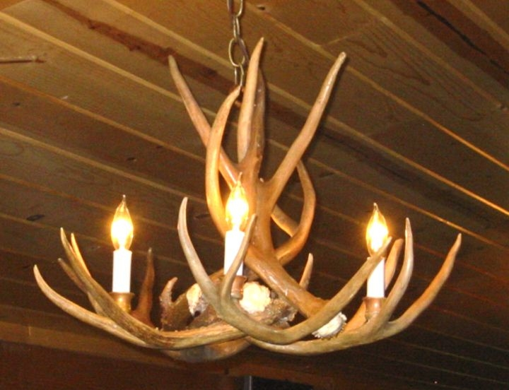 Antler Chandeliers For Sale Real Mccoy Intended For Turquoise Antler Chandeliers (Image 8 of 25)