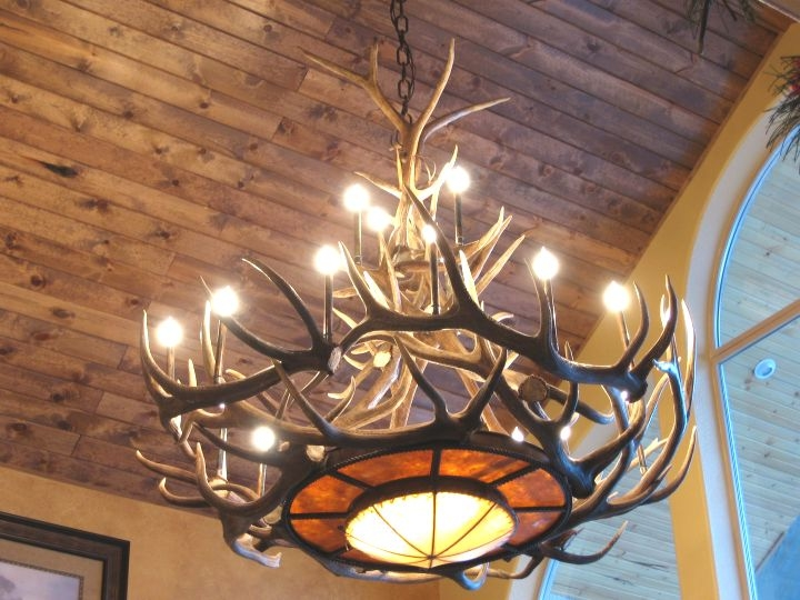 Antler Chandeliers For Sale Real Mccoy Intended For Turquoise Antler Chandeliers (Image 9 of 25)