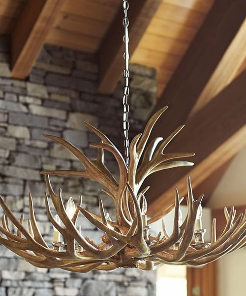 Best 25 Antlers Ideas On Pinterest The Antlers Taxidermy Decor With Regard To Turquoise Antler Chandeliers (Image 15 of 25)