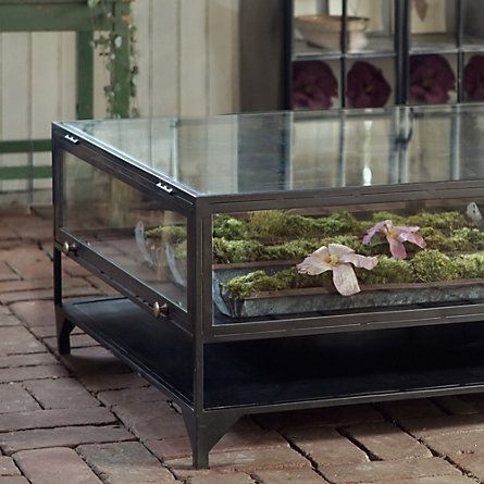Great Favorite Dragon Coffee Tables With Regard To Best 25 Coffee Table Aquarium Ideas Only On Pinterest Fish Tank (Image 26 of 50)