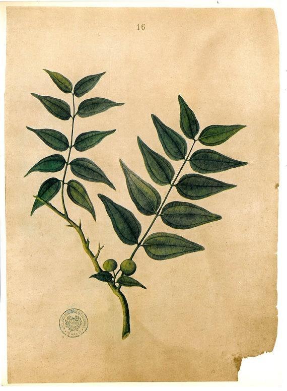 164 Best Botanicals Images On Pinterest | Botanical Prints, Books With Botanical Prints Etsy (Image 1 of 20)