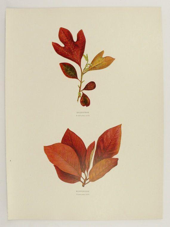 192 Best Botanica Images On Pinterest | Botany, Botanical Prints Inside Botanical Prints Etsy (Image 2 of 20)
