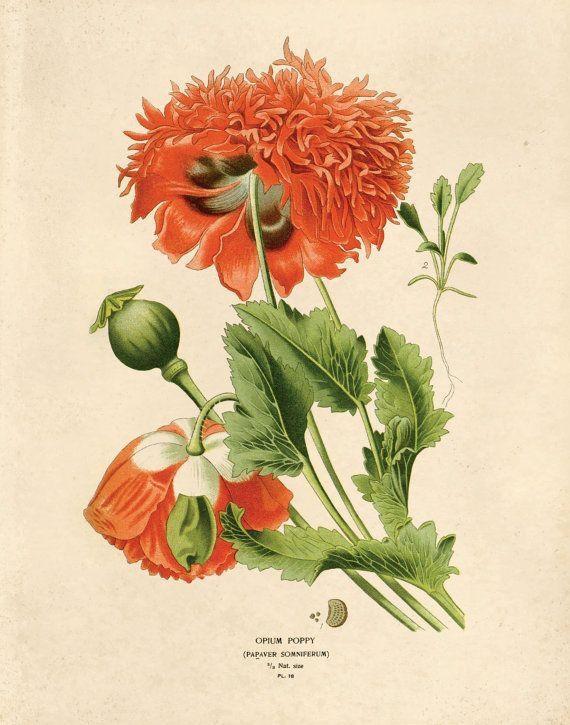 212 Best Etsy Loves Images On Pinterest | Typography Prints Within Botanical Prints Etsy (Image 4 of 20)