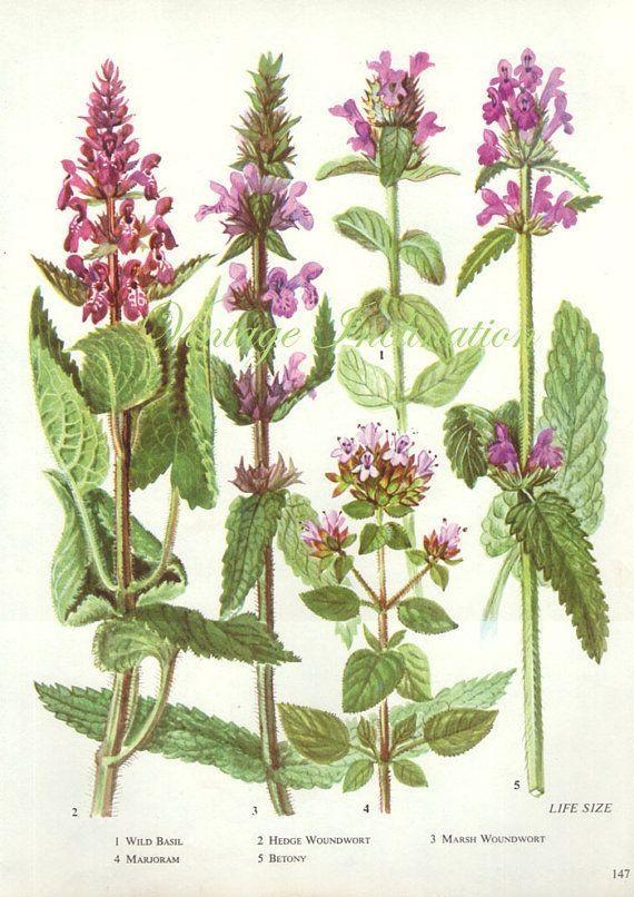 25 Best Art – Blue Images On Pinterest | Botany, Blue Flowers And With Regard To Botanical Prints Etsy (Image 6 of 20)