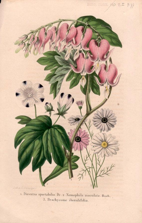 27 Best Botanical Prints Images On Pinterest | Botanical Prints Regarding Botanical Prints Etsy (View 6 of 20)