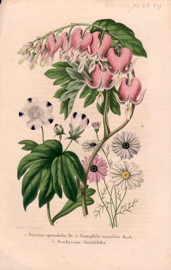 27 Best Botanical Prints Images On Pinterest | Botanical Prints Regarding Botanical Prints Etsy (Image 7 of 20)