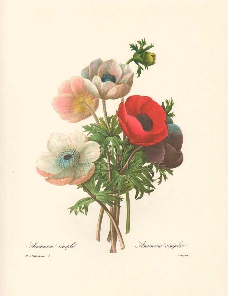29 Best Vintage Botanical Prints Images On Pinterest | Botany With Botanical Prints Etsy (Image 8 of 20)