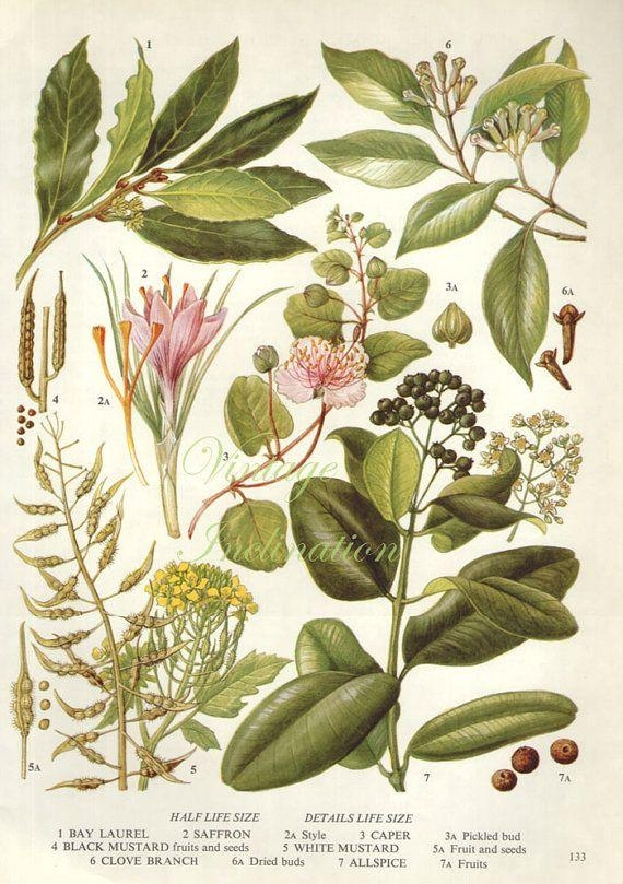 65 Best Botanical Prints Images On Pinterest | Botany, Botanical Inside Botanical Prints Etsy (View 14 of 20)