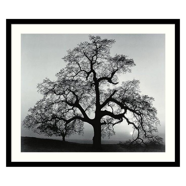 70 Best Hill Images On Pinterest | Oak Tree, Angel Oak Trees And Throughout Oak Tree Wall Art (View 9 of 20)
