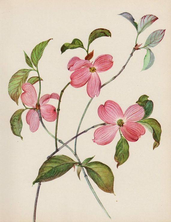 73 Best Pink Gallery Wall Art Images On Pinterest | Botanical For French Country Wall Art Prints (Image 2 of 20)