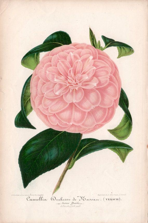 735 Best Botanical Prints 1 Images On Pinterest | Botanical Prints Pertaining To Botanical Prints Etsy (View 19 of 20)