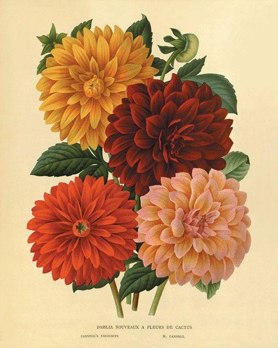 748 Best .: B O T A N I C A L :. Images On Pinterest | Botanical With Regard To Botanical Prints Etsy (Photo 2 of 20)