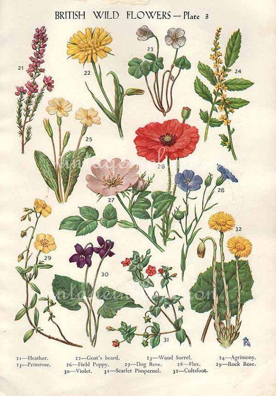 Best 25+ Botanical Prints Ideas On Pinterest | Vintage Botanical Pertaining To Botanical Prints Etsy (Image 16 of 20)