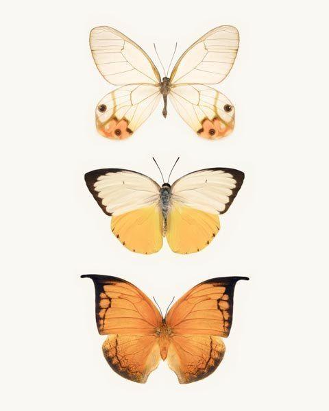 Best 25+ Butterfly Wall Art Ideas On Pinterest | 3D Butterfly Wall Within Pink Butterfly Wall Art (Image 11 of 20)