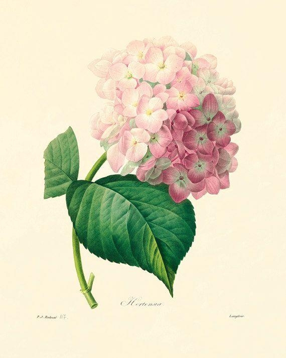 Best 25+ Vintage Botanical Prints Ideas On Pinterest | Vintage With Botanical Prints Etsy (View 1 of 20)