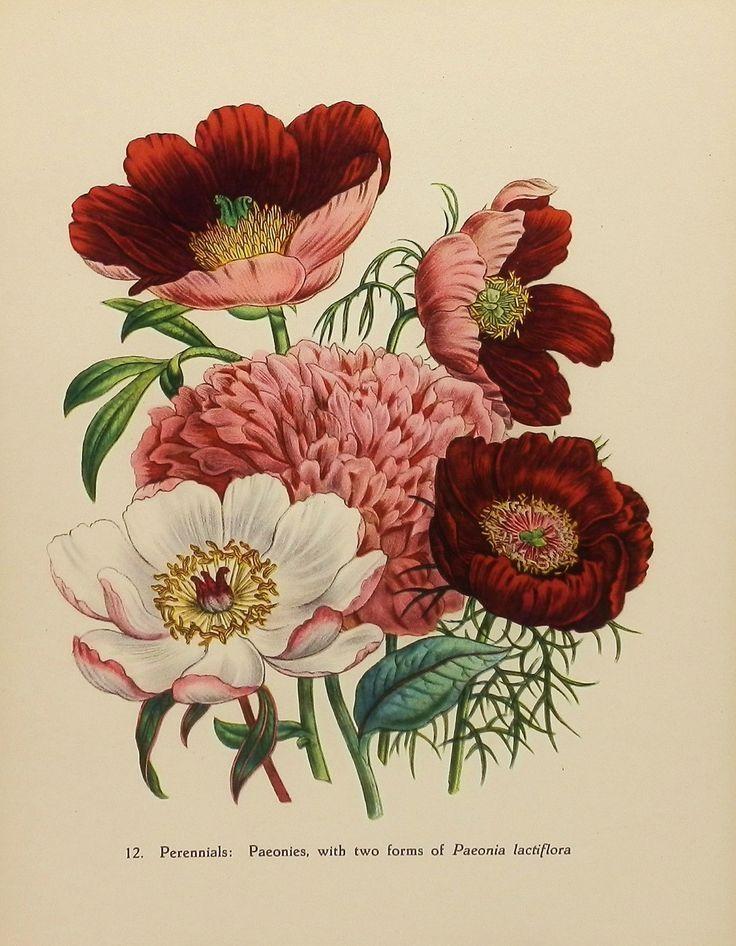 Best 25+ Vintage Flower Prints Ideas On Pinterest | Vintage Prints Pertaining To Botanical Prints Etsy (Image 18 of 20)