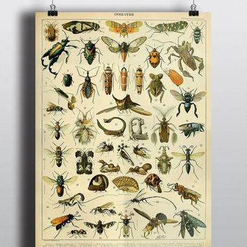 Best Insect Science Products On Wanelo Pertaining To Insect Wall Art (View 4 of 20)