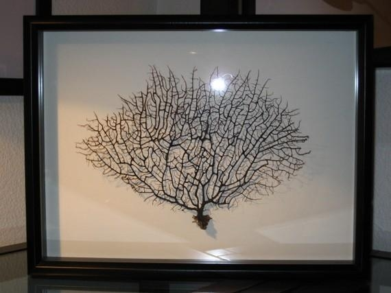 Black Sea Fan Coral Reliquary For Sea Fan Wall Art (Image 4 of 20)