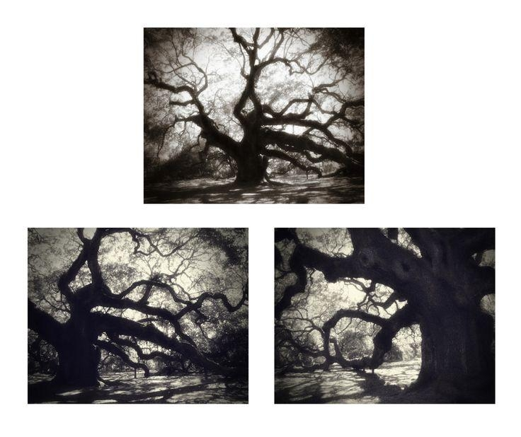 Black & White Wall Art, Angel Oak Tree Photography Set Of 3 Prints Within Oak Tree Wall Art (View 14 of 20)