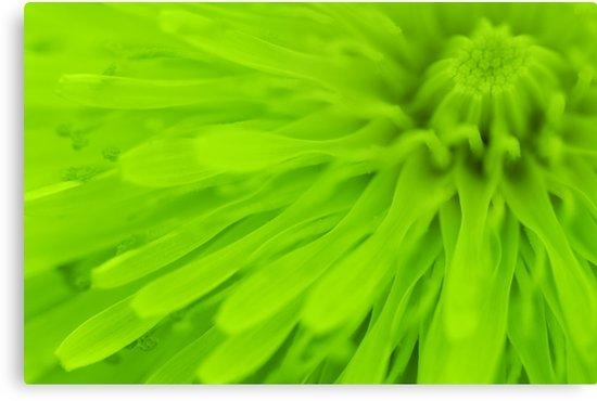 "Bright Lime Green Wall Art"" Canvas Printsnatalie Kinnear Inside Lime Green Wall Art (Image 8 of 20)"