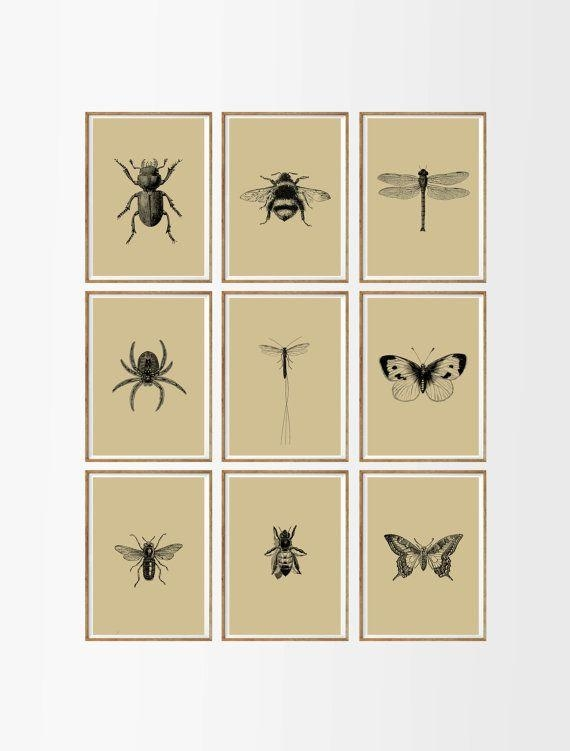 Bugs And Insects Art Print Set Of 9. Unframed A (View 2 of 20)