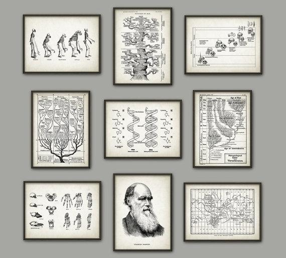 Evolution Wall Art Print Set Of 9 Biology Wall Art Charles Within Wall Art Print Sets (Image 13 of 20)
