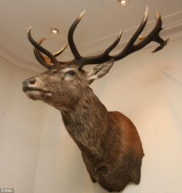 Exmoor Emperor: Is Executed Stag's Head On Devon's Hartnoll Hotel Pertaining To Stags Head Wall Art (Image 11 of 20)