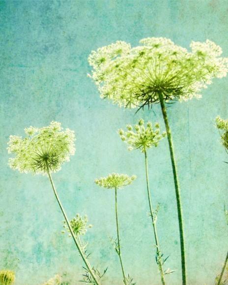 Flower Photography Aqua Blue Wall Art Nature Photography In Blue And Green Wall Art (View 17 of 20)