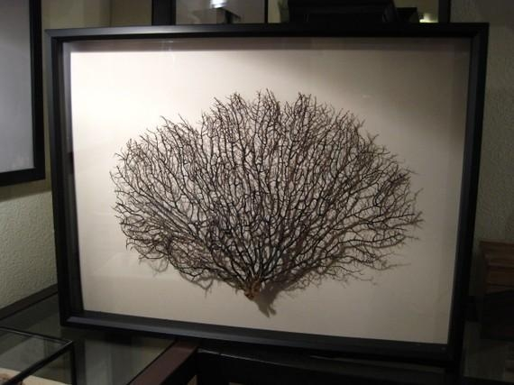 Framed Black Sea Fan Sea Fan Wall Art Pertaining To Sea Fan Wall Art (Image 9 of 20)