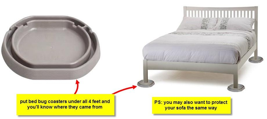 How To Protect Sofa From Bed Bugs